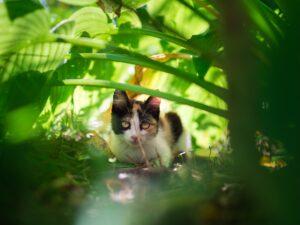 young cat amonst plants
