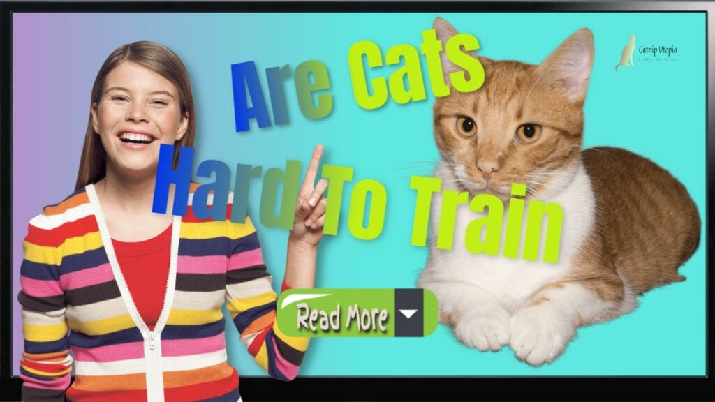 "Featured image with text: ""How to Train a Cat and are Cats hard To train""."
