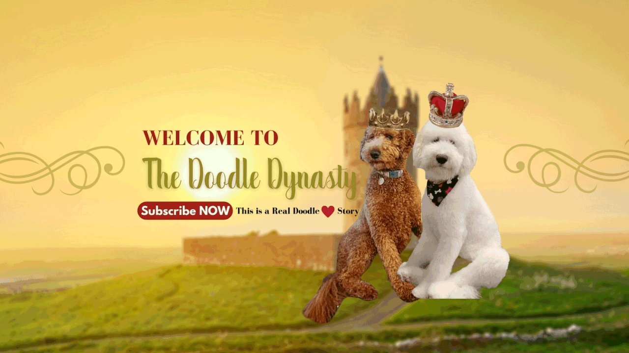 "Image text: ""Labradoodle doodle dynasty"". Image by our Goldendoodles breeder."