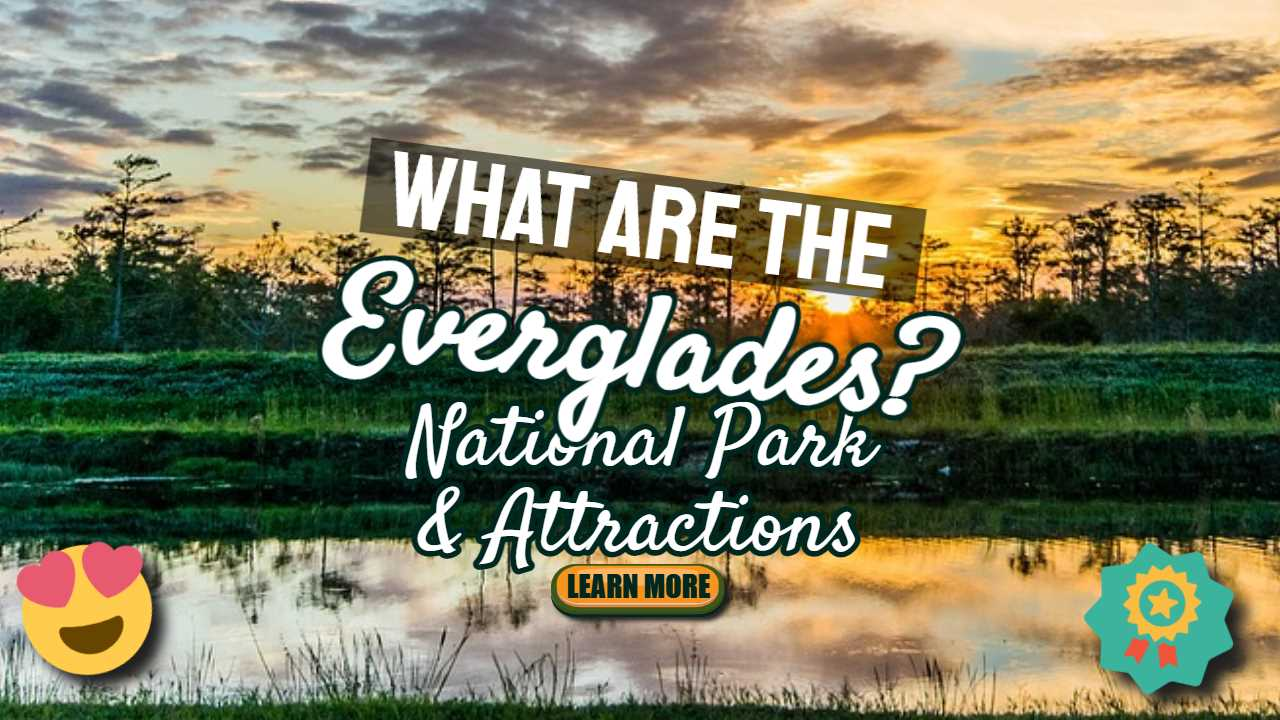 """Featured image text: """"What are the Everglades?"""""""
