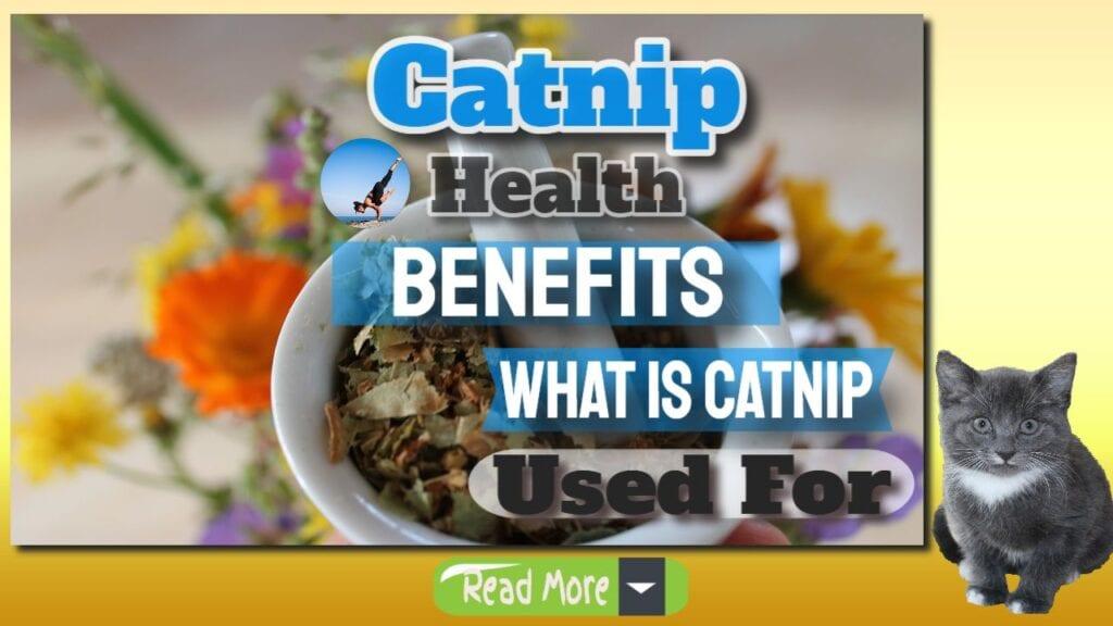catnip health benefits banner